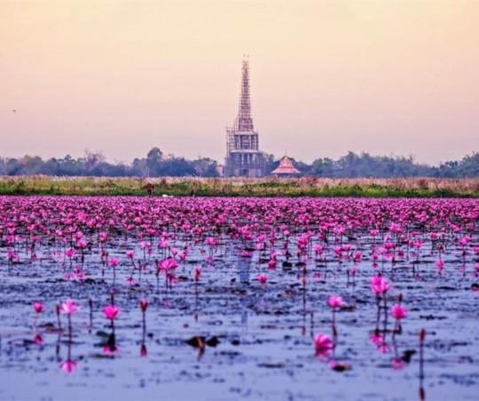 bangkok-2015-11-18-01